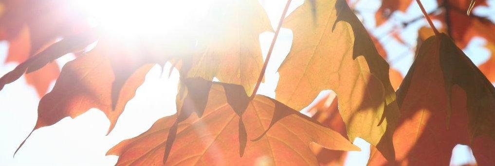 leaves header comp
