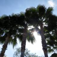 It's not a trip to southern California without a pic of palm trees